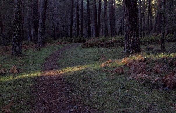 Luz en el camino