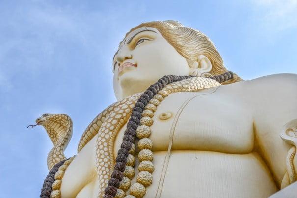 Shares of Yogi