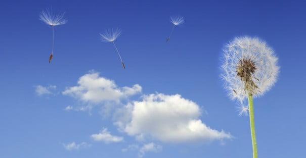 Цветок небо