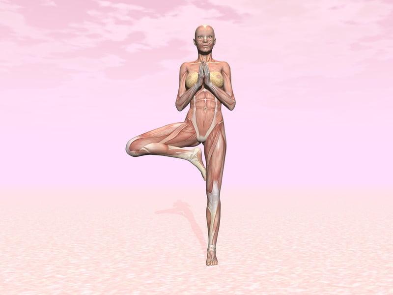 Quieres saber más de Anatomía? | Yoga en Red