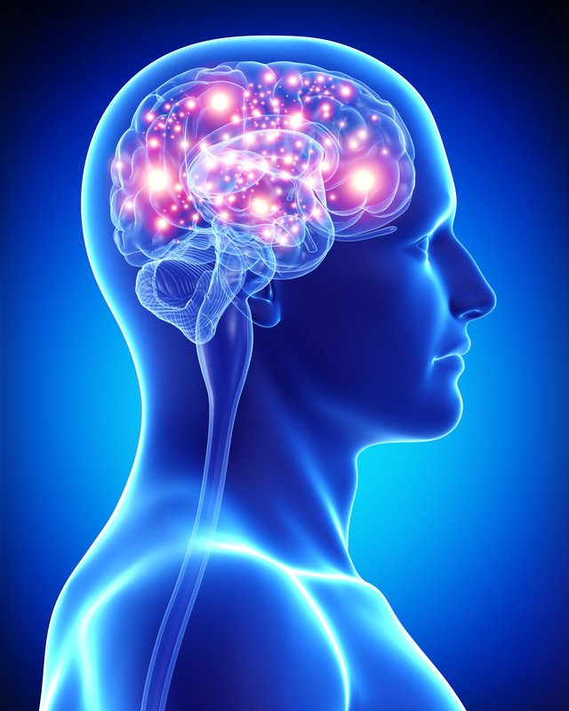 how electrical and neurochemical activity of the brain is related to behaviour essay