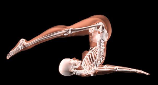 Cuerpo_anatomia