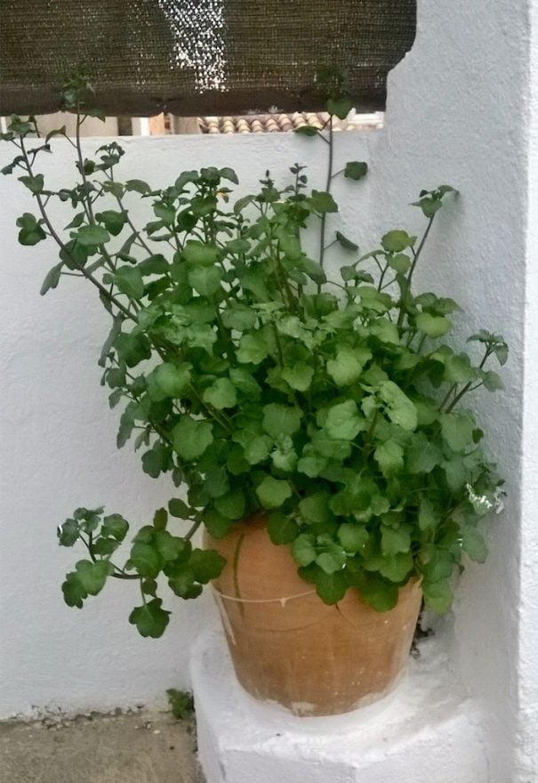 plant without name